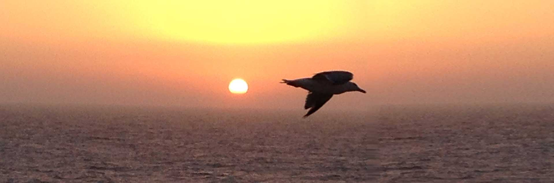 Header photo of bird flying over the sea