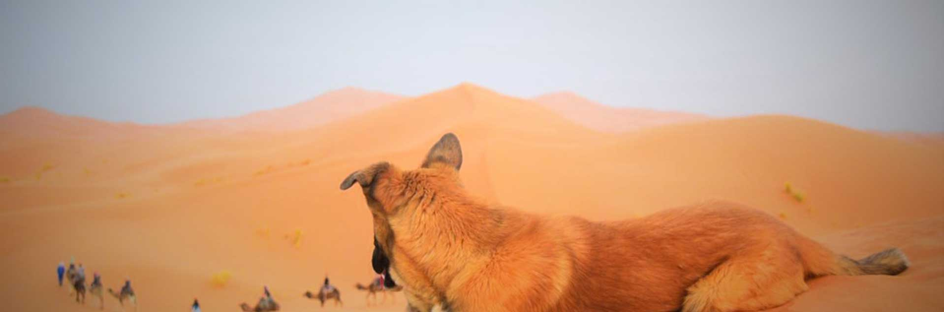 Header photo of a dog in the desert